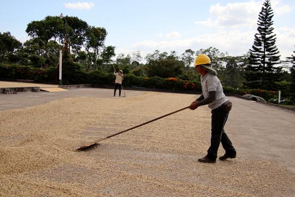 19-04 Doka Coffee Plantation (55)