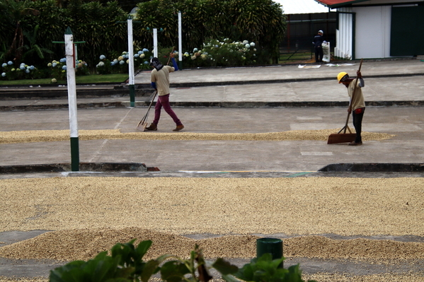 21-04 Doka Coffee Plantation (66)