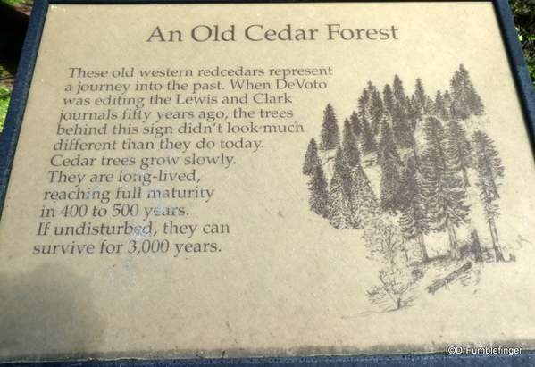 02 DeVoto Cedar Grove