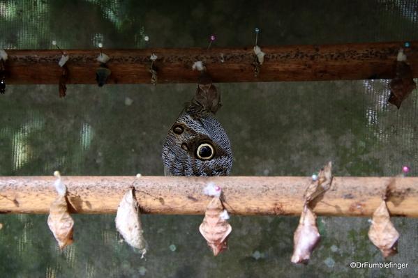 02 Butterfly garden at Guapiles (7)