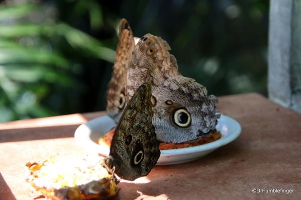 04 Butterfly garden at Guapiles