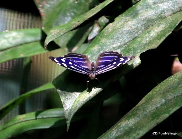 05 Butterfly garden at Guapiles