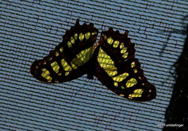 06 Butterfly garden at Guapiles