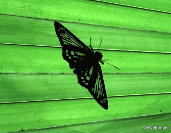 07 Butterfly garden at Guapiles