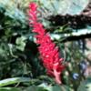 Butterfly garden, Guapiles