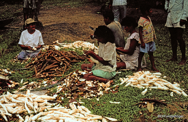 11 Peruvian Amazon Harvesting Yaka