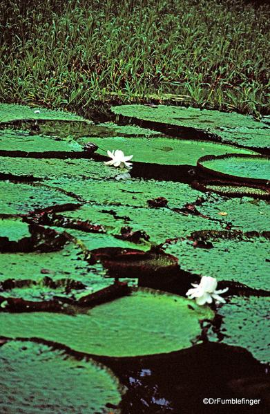 12 Peruvian Amazon