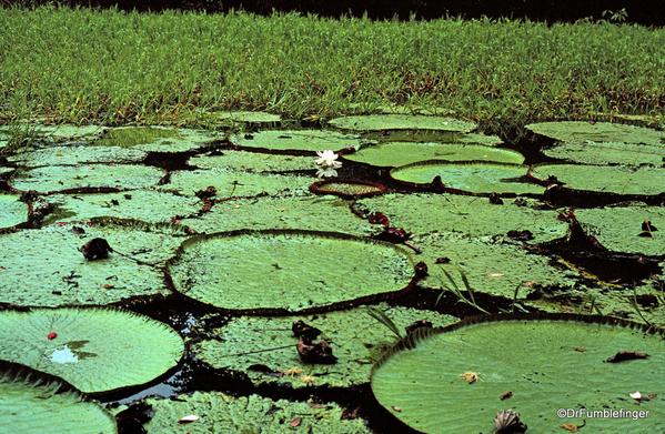 13 Peruvian Amazon