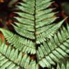 14 Peruvian Amazon