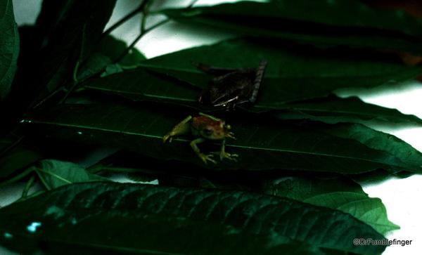 15 Peruvian Amazon