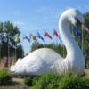 Swan River Swan