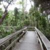 00 Mahogany Hammock Trail