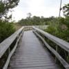 05 Mahogany Hammock Trail