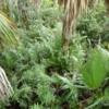08 Mahogany Hammock Trail