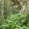 09 Mahogany Hammock Trail