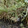 10 Mahogany Hammock Trail