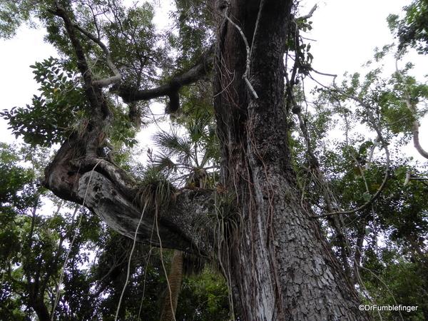 11 Mahogany Hammock Trail