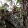 12 Mahogany  Hammock Trail