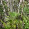 13 Mahogany Hammock Trail