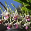 00 Orchid Garden, en route to Manuel Antonio