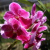 07 Commercial Orchid Garden, trip to