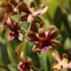 18 Orchid Garden, en route to Manuel Antonio