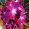 19 Orchid Garden, en route to Manuel Antonio
