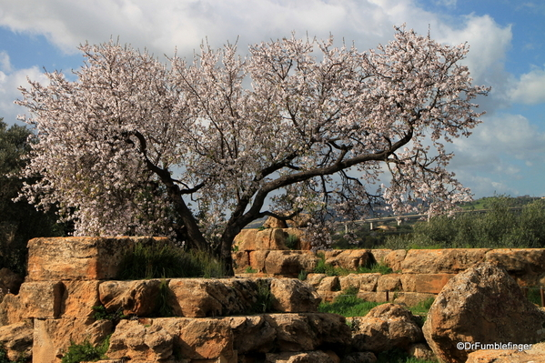 01 Almond blossoms, Agrigento