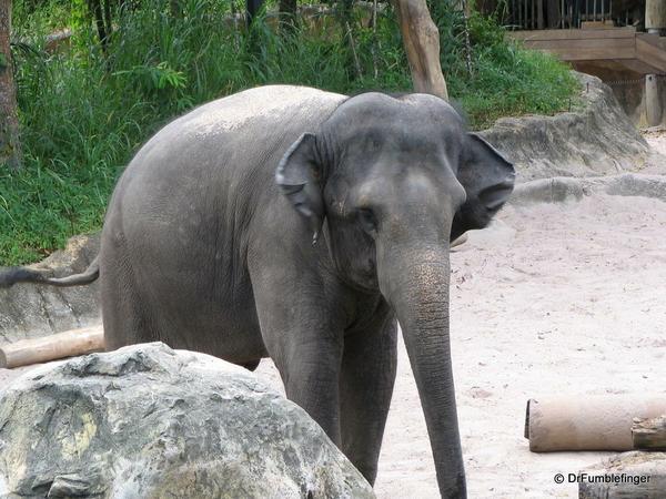 022 Singapore 2-2006. Zoo. Elephants