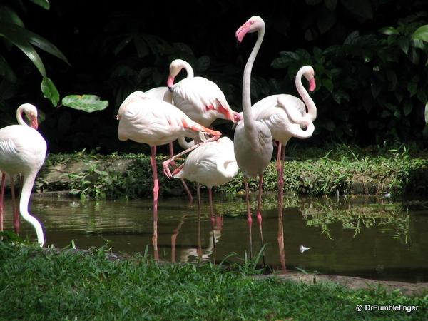 038 Singapore 2-2006. Zoo. FLAMINGOS