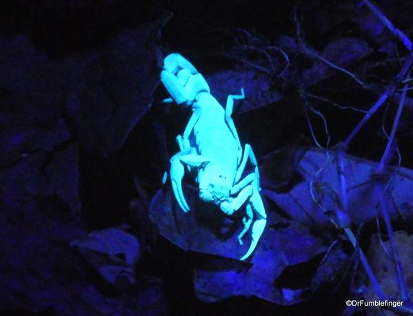 03 Monteverde Night Walk (17)