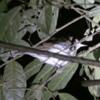 03 Monteverde Night Walk (9)