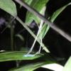 03 Monteverde Night Walk (21)