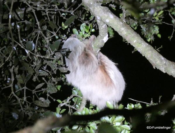 03 Monteverde Night Walk (34)