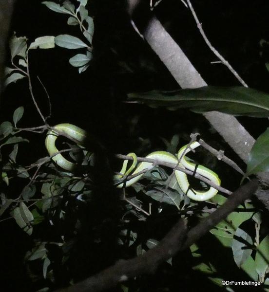 03 Monteverde Night Walk (69)