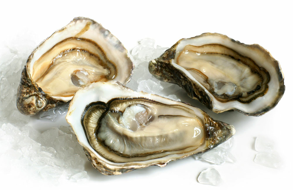 Oysters - vital.hr