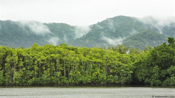 8_View of Daintree River from ferry
