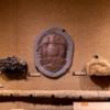 Lessuck - museum Earth-14