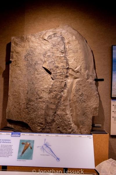 Lessuck - museum Earth-15