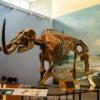 Lessuck - museum Earth-21