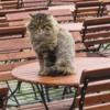 9A_Cool cat