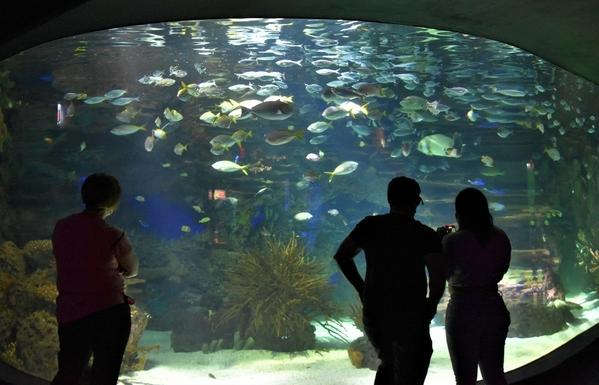 4-Aquarium 2