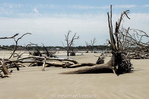 Lessuck_hunting island-27