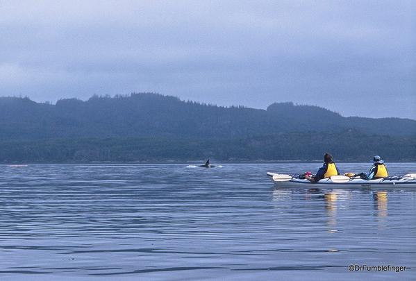 03 Johnstone Strait
