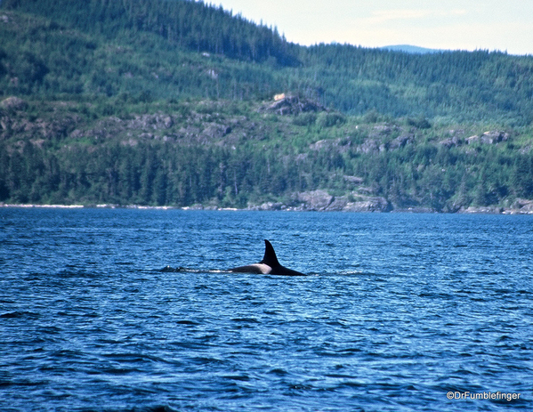 09 Johnstone Strait