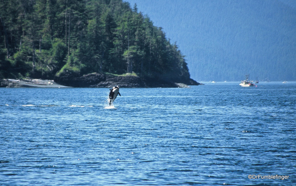 10 Johnstone Strait