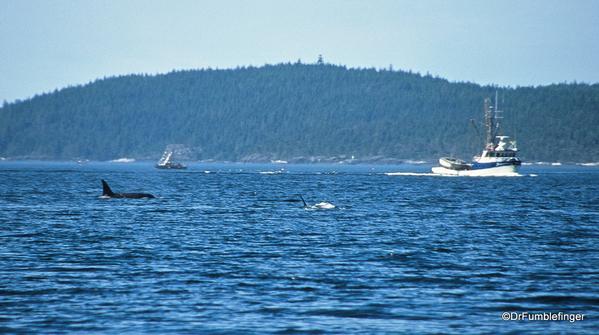 11 Johnstone Strait