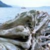 18 Johnstone Strait