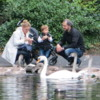 Families Feeding Swans, St. Stephen's Green, Dublin, Ireland