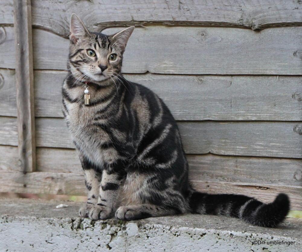 Irish Cat, Kenmare, Ireland